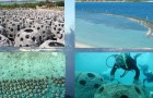 Sztuczna rafa sprawdziła się już w wielu miejscach na świecie   Fot. Urząd Morski Słupsk