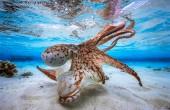 Podwodne głębiny są przepiękne (foto)