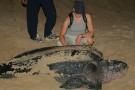 W woj. łódzkim odkryto szczątki żółwia morskiego sprzed 148 mln lat