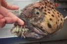 Kolekcja ryb zombie rosyjskiego rybaka (foto)