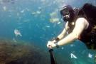 Śmieci zamiast diabłów morskich. Ocean Indyjski wielkim wysypiskiem (foto, wideo)