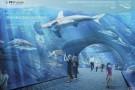 Znamy datę otwarcia oceanarium w Gdańsku. To będzie największy tego typu obiekt w Europie (wizualizacje)