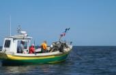 Prezydent podpisał nowelizację ustawy o rybołówstwie morskim