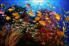 Trwają pracę nad traktatem o ochronie bioróżnorodności morskiej