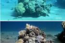 Naukowcy stworzyli algorytm usuwający wodę z podwodnych zdjęć (foto, wideo)