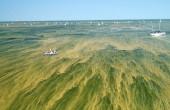Mięsożerne bakterie rosnącym zagrożeniem w coraz cieplejszych wodach Bałtyku