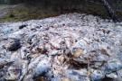 Setki kilogramów ryb wyrzuconych w lesie