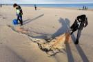 Ponad pół tony śmieci zebrano podczas I etapu Bałtyckiej Odysei