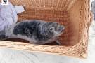 30 młodych fok trafiło na rehabilitację