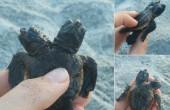 Znaleziono żółwia mutanta