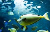 Około 450 gatunków ryb może zmieniać swoją płeć