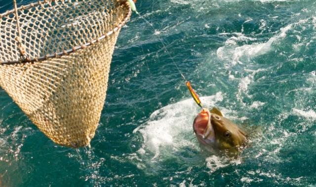 Nowe uregulowania rybołówstwa rekreacyjnego - GospodarkaMorska.pl