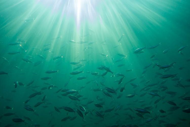 Połów ryb prądem: BLOOM składa drugą skargę przeciwko Holandii - GospodarkaMorska.pl