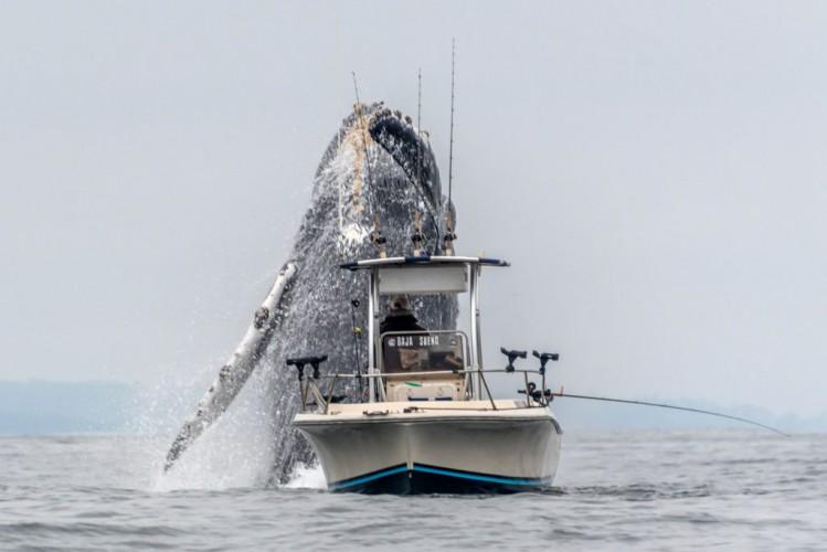 Gigantyczny wieloryb i mały kuter - to wideo jest hitem internetu - GospodarkaMorska.pl