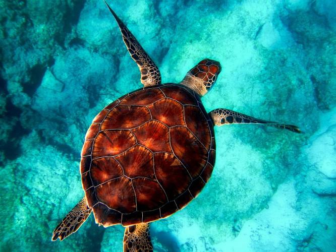 Dzisiaj obchodzimy Światowy Dzień Oceanów - GospodarkaMorska.pl