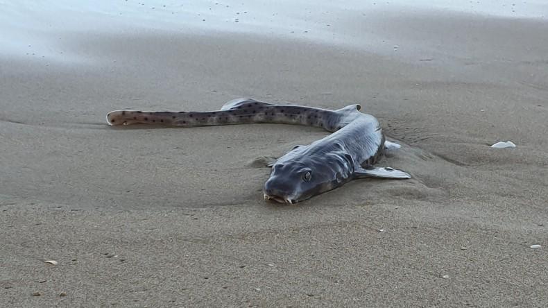 Na plaży w Australii znaleziono rybę o kocich oczach - GospodarkaMorska.pl