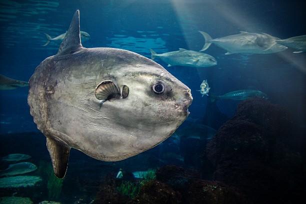 Egzotyczna ryba znaleziona w Bałtyku! - GospodarkaMorska.pl