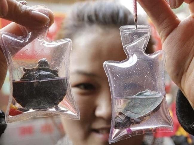 Okrutna moda w Chinach. Breloczki z żywymi zwierzętami (foto, wideo) - GospodarkaMorska.pl
