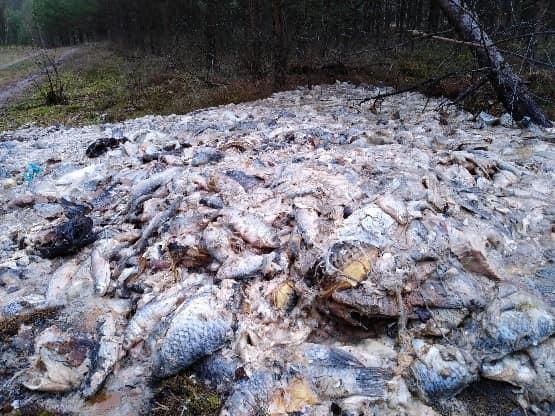 Setki kilogramów ryb wyrzuconych w lesie - GospodarkaMorska.pl