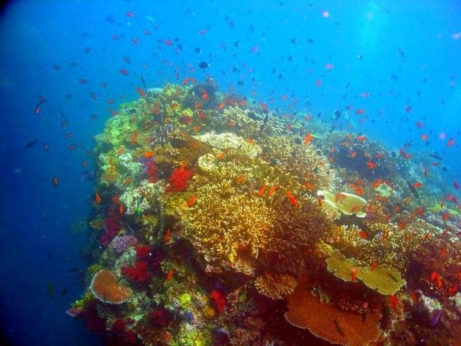 Nic nie jest w stanie uchronić raf koralowych przed zagładą? Naukowcy przewidują, że znikną za 80 lat - GospodarkaMorska.pl
