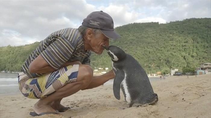 Niezwykła przyjaźń pingwina i człowieka, który uratował mu życie (foto, wideo) - GospodarkaMorska.pl
