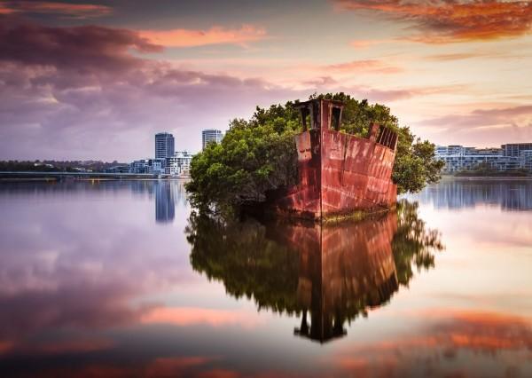 Niezwykły las na wodzie w Sydney (foto) - GospodarkaMorska.pl