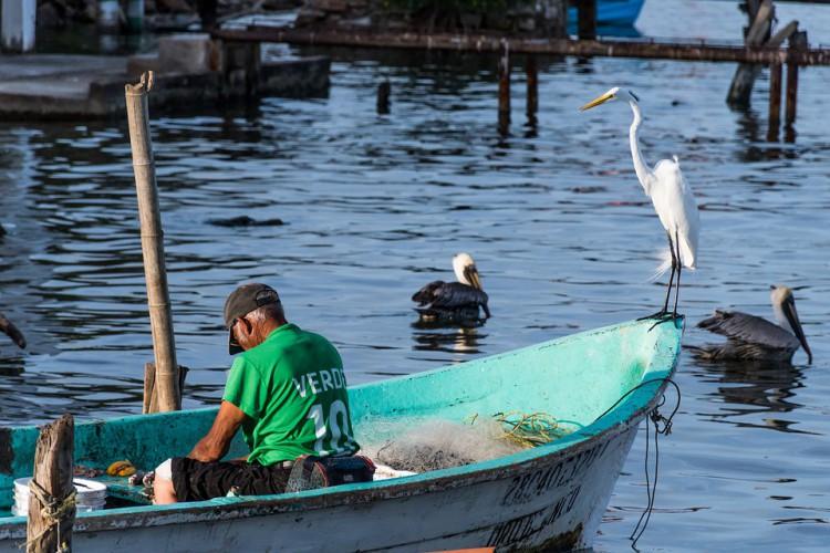 Włochy: spadek konsumpcji ryb o 55 procent z powodu pandemii - GospodarkaMorska.pl