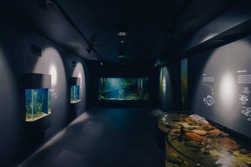 Akwarium Gdyńskie otwarte dla zwiedzających - GospodarkaMorska.pl