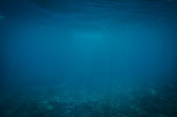 Głębokomorskie wydobycie może zniszczyć nieodkryte gatunki - twierdzi Ocean Panel - GospodarkaMorska.pl
