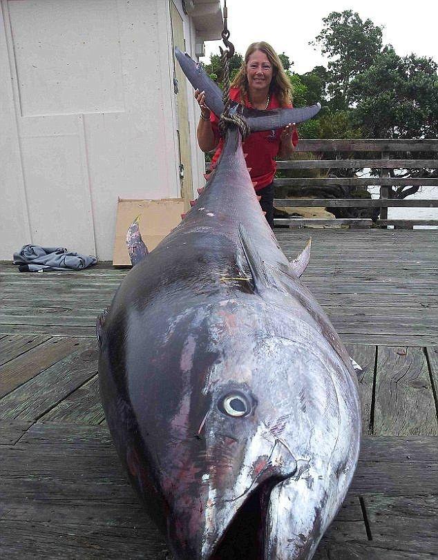 Rekord świata pobity. Gigantyczny tuńczyk ważył ponad 400 kg! - GospodarkaMorska.pl