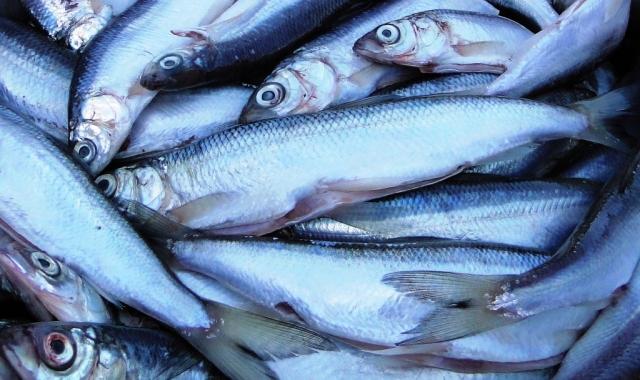 Weszła w życie ustawa o organizacji rynku rybnego - GospodarkaMorska.pl