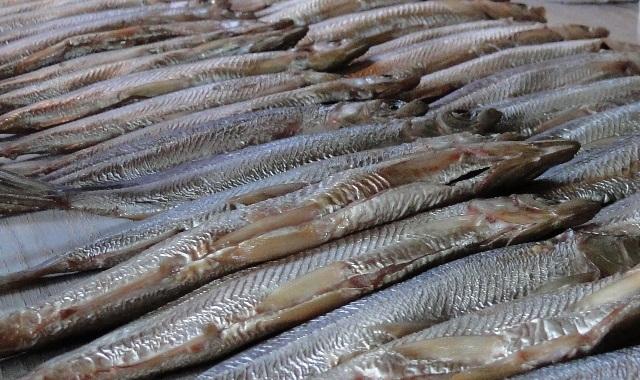 Rynek indyjski otwarty dla polskich produktów rybołówstwa - GospodarkaMorska.pl