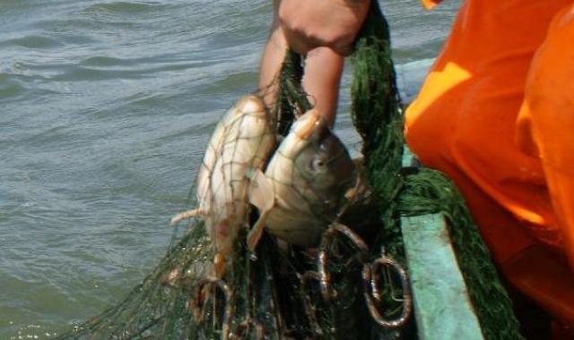 Znakowanie ryb i produktów rybnych - o tym powinien wiedzieć każdy konsument - GospodarkaMorska.pl