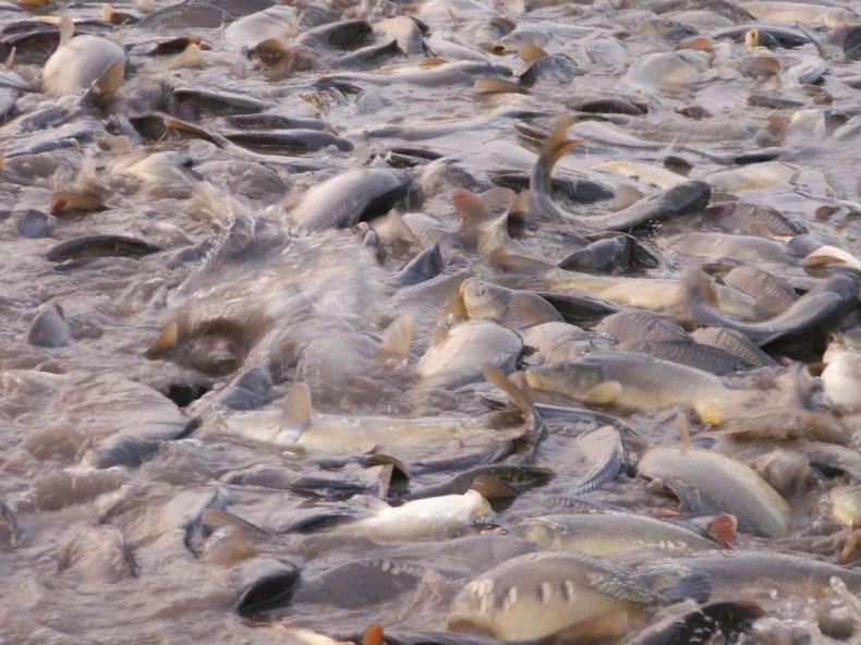 Świeże, zdrowe i dorodne - takie są ryby z akwakultury - GospodarkaMorska.pl