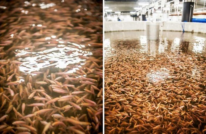 Największa i najbardziej nowoczesna akwakultura w Europie znajduje się w Polsce - GospodarkaMorska.pl