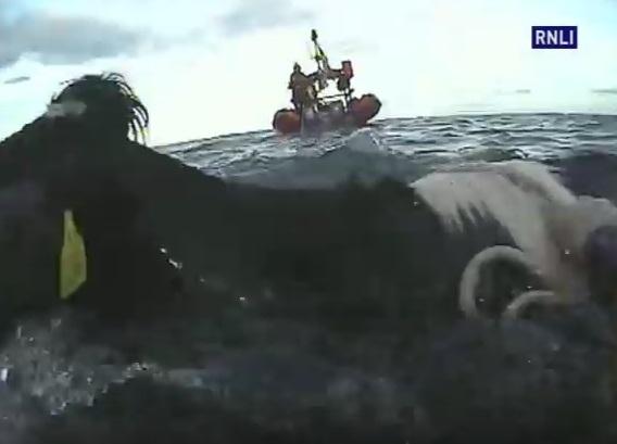 Ratunek dla krów uwięzionych w morzu (wideo) - GospodarkaMorska.pl