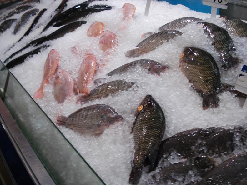 Białoruś chce współpracy z Polską w hodowli ryb śródlądowych - GospodarkaMorska.pl