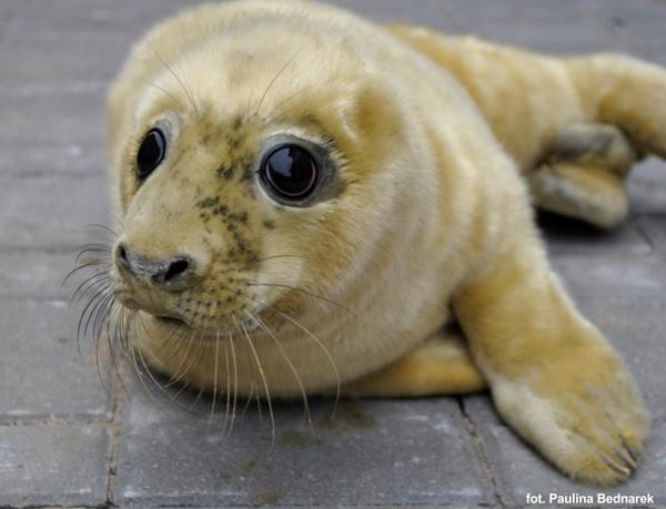 W Stacji Morskiej urodziły się cztery młode foki - GospodarkaMorska.pl