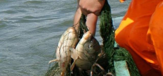 Oceana: Nowy plan zarządzania rybołówstwem kontynuje przełowienie bałtyckich zasobów - GospodarkaMorska.pl