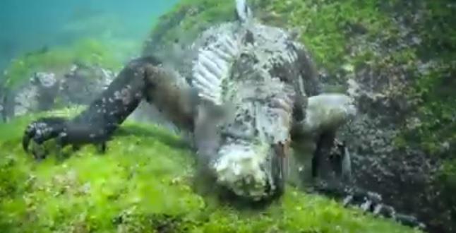 """""""Godzilla"""" z głębin. Niesamowite wideo - GospodarkaMorska.pl"""