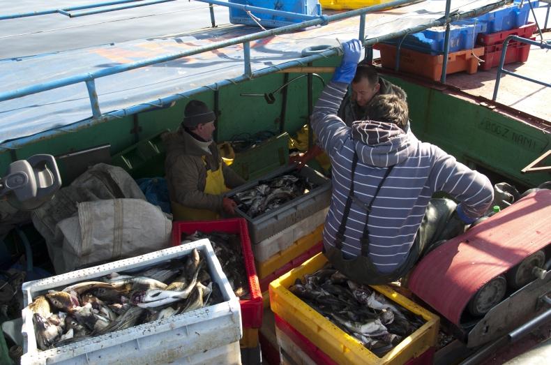 Rybacy nie zgadzają się z rekomendacją ICES - GospodarkaMorska.pl