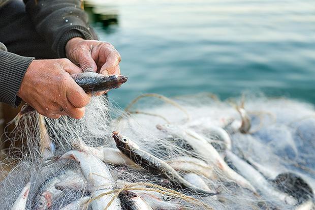 90 proc. światowych zasobów ryb jest przełowionych lub zagrożonych wyginięciem. To może oznaczać problemy dla konsumentów i gospodarki - GospodarkaMorska.pl