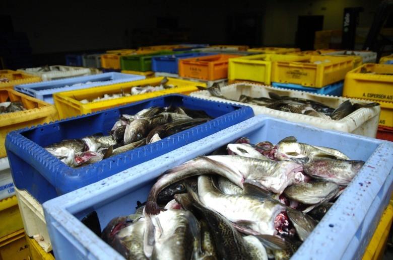 Za certyfikowane ryby i owoce morza Polacy gotowi są zapłacić więcej. Zrównoważone połowy chronią środowisko - GospodarkaMorska.pl