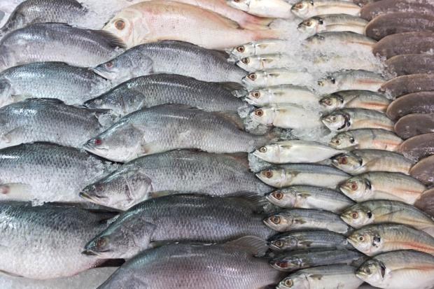 KE zadowolona z kwot połowowych na Bałtyku, ekolodzy zawiedzeni - GospodarkaMorska.pl