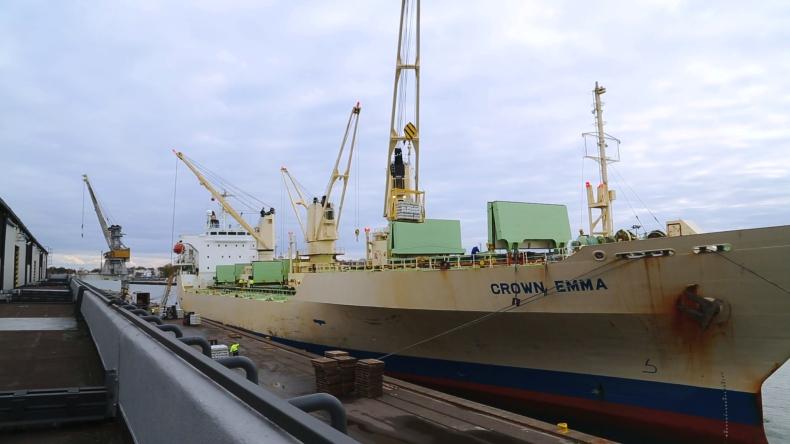 Ponad 5 000 t bananów w gdańskim porcie (wideo) - GospodarkaMorska.pl