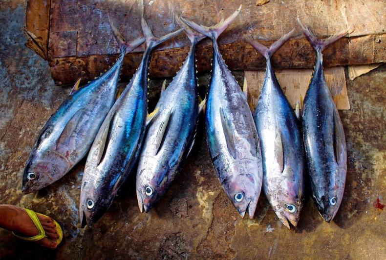 Na polskie stoły trafia 9 tys. ton tuńczyka rocznie. To niewiele w porównaniu do krajów Europy Zachodniej - GospodarkaMorska.pl