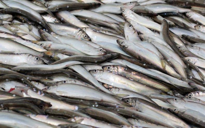 W 2016 r. podrożały ryby i ich przetwory - GospodarkaMorska.pl