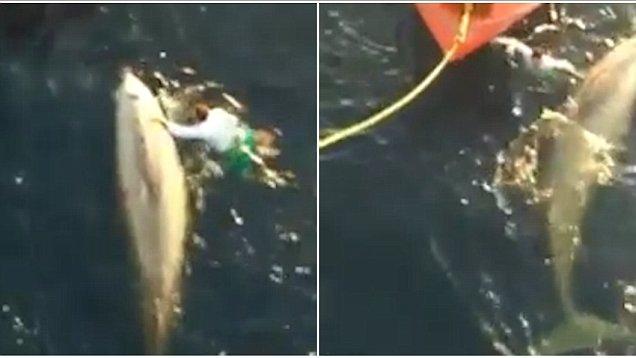 Marynarz uratował zaplątanego w sieć wieloryba (wideo) - GospodarkaMorska.pl