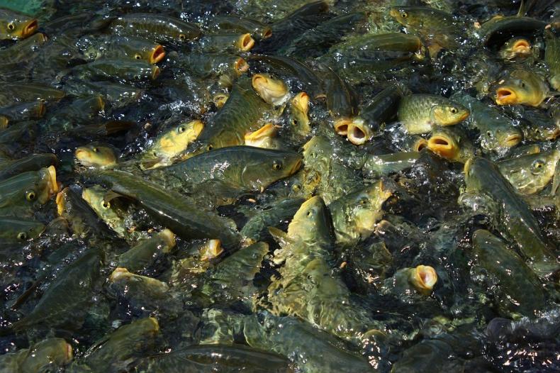 Prostsze procedury dla rybaków? Pracuje nad nimi europejska komisja - GospodarkaMorska.pl