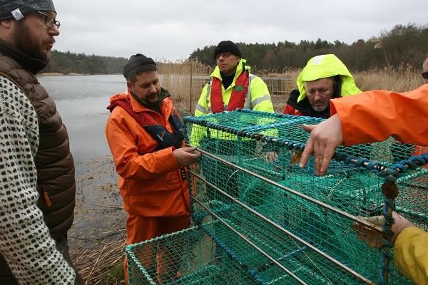 Czym łowić ryby, gdy obok czyha foka, czyli – szwedzkie doświadczenia okiem polskich rybaków - GospodarkaMorska.pl